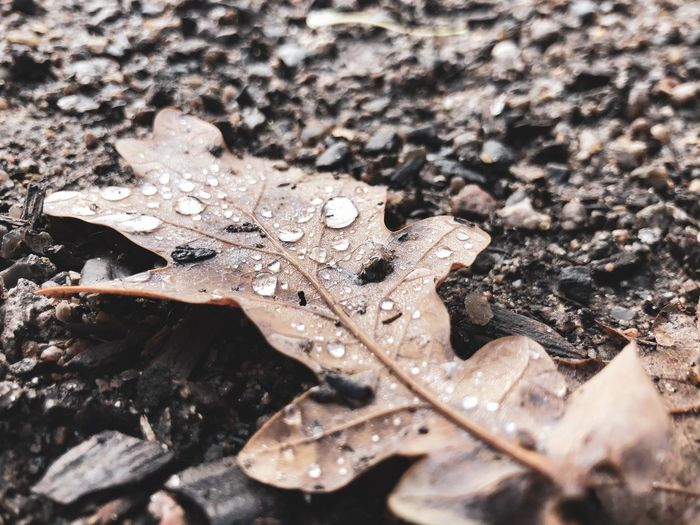 Close-up of raindrops on dry leaves