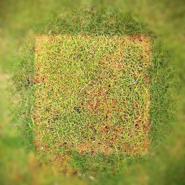 A study for grass interventions , 2017, Nature Growth Green Color Day Beauty In Nature Plant Outdoors Field No People Close-up Freshness Art Grass ArtWork Landscape Conceptual Earthworks Public Intervention Sunlight Investing In Quality Of Life EyeEmNewHere Breathing Space The Week On EyeEm Creative Space
