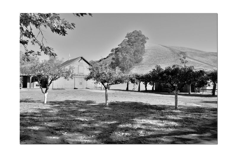 Garin Regional Park 7 Garin Ranch Rolling Hills Bnw_friday_eyeemchallenge Garin Barn Nature Trees Steep Canyons Hiking Trails Lush Valley Monochrome Monochrome Photograhy Shadows Black & White Black And White Photography Black And White Black And White Collection  Landscape_Collection Landscape_photography Landscape Landscape_lovers Hayward,Ca Visitor Center Beauty In Nature