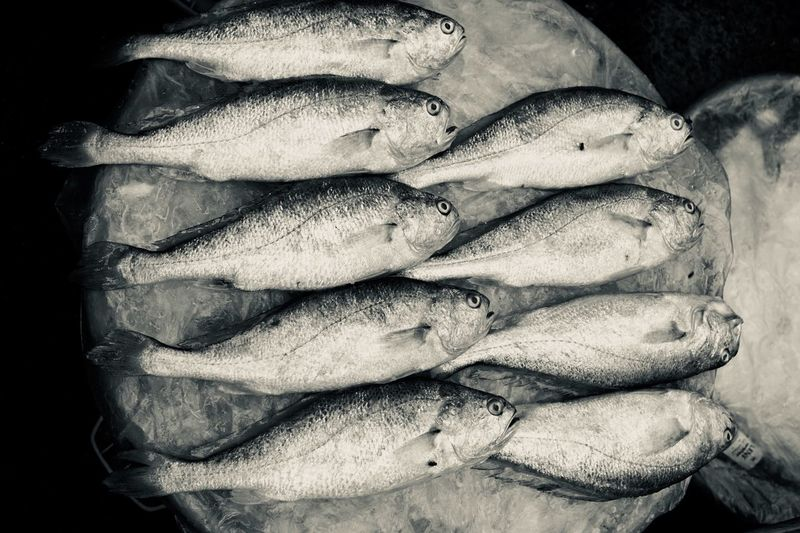 Monochrome Black & White Marketplace Black And White Fish Seafood Close-up High Angle View Freshness No People Black Background Still Life Food