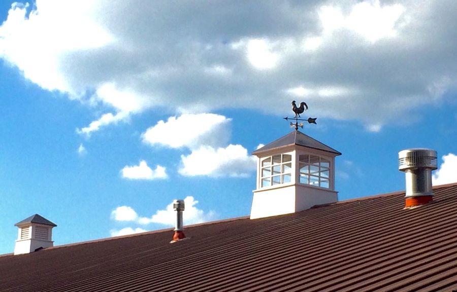 Barn Farm Rooster Blue Skies