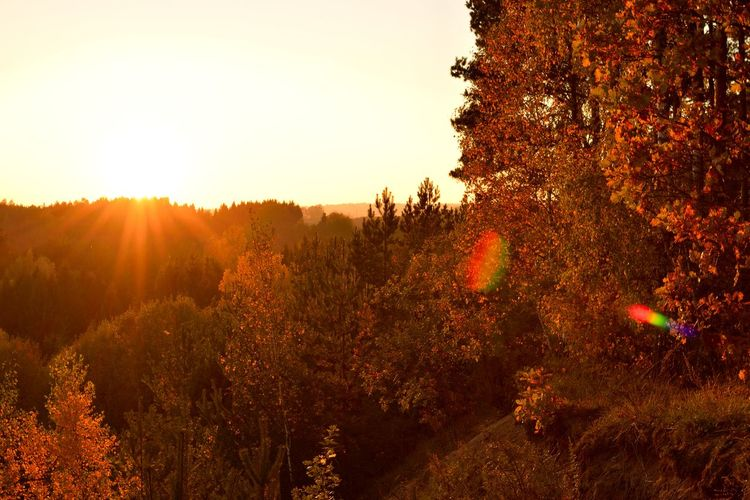 Autumn Beauty In Nature Change Day Environment Forest Growth Land Lens Flare Nature No People Orange Color Outdoors Plant Scenics - Nature Sky Sun Sunlight Tranquil Scene Tranquility Tree