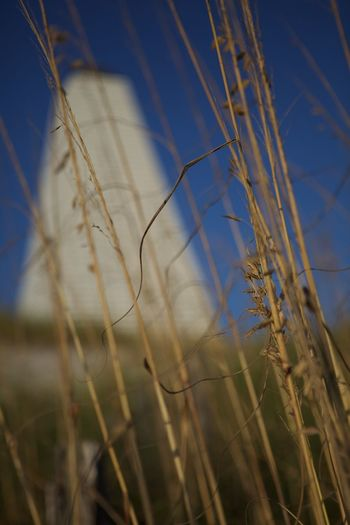Beauty In Nature Blue Focus On Foreground Grass No People Seaside Fl Selective Focus Sky