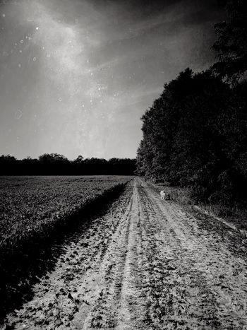 Dirt road Monochrome Blackandwhite Dog Plant Sky Field Land Scenics - Nature Tree Nature