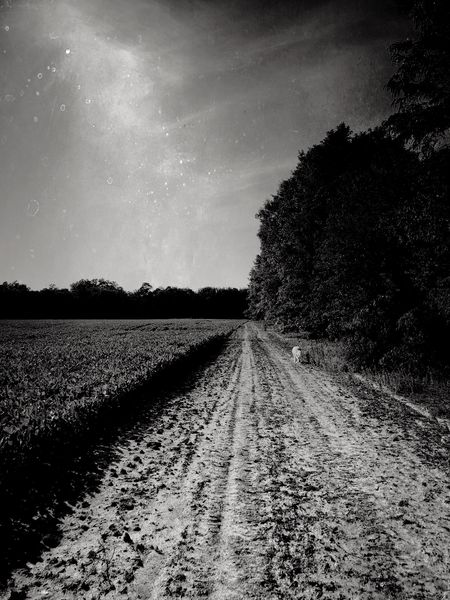 Dirt road Monochrome Blackandwhite Dog Plant Sky Field Land Scenics - Nature Tree Nature