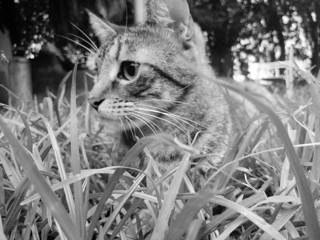 Tanu In My Garden Enjoy The Little Things Beauty In Nature Focus B&w Street Photography Domestic Cat One Animal Pets Animal Themes Domestic Animals No People Mammal Feline Day Close-up Outdoors Rural Scene Nature