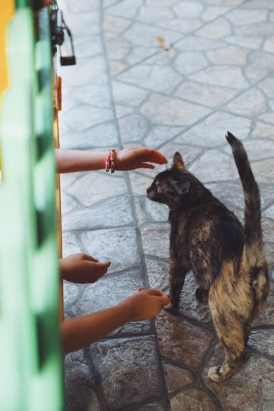 Human Hand Pets Real People One Animal One Person Dog Human Body Part Mammal Domestic Animals Outdoors Day Lifestyles Women Low Section Close-up People Full Frame Full Length High Angle View Animal Street Hands Petting Animals Attraction Attractive Pet Portraits