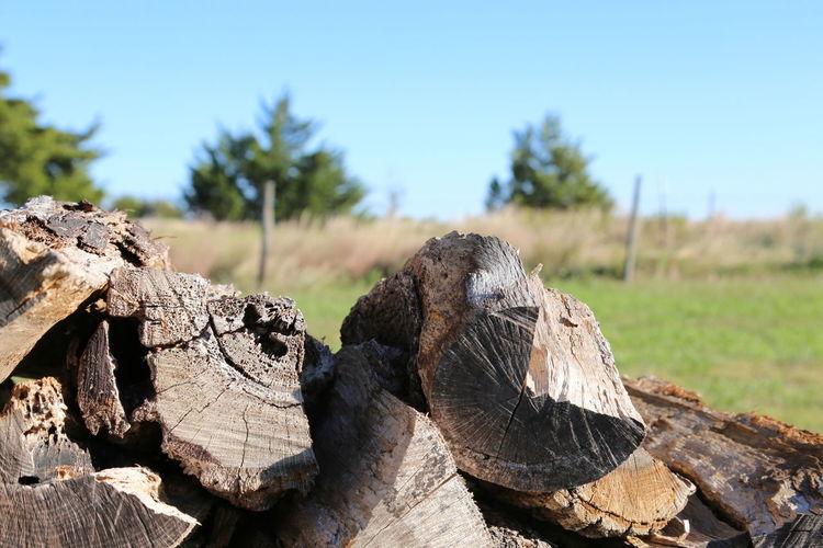 Close-up of logs on tree stump