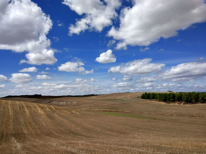 Cloud - Sky Landscape Field Agriculture Rural Scene Sky Nature No People