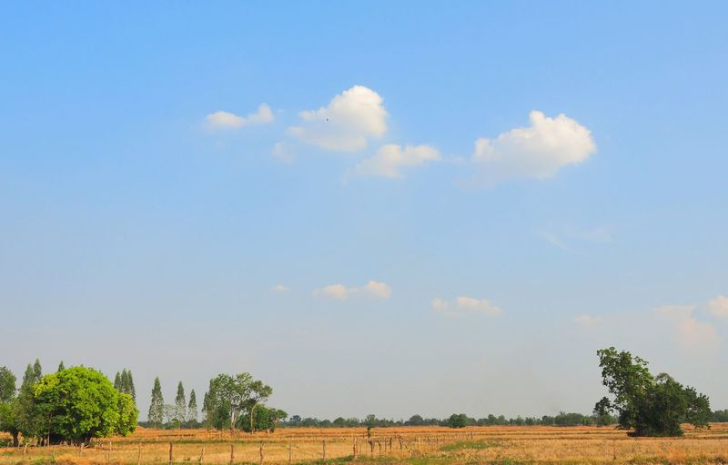 Tree Rural Scene Agriculture Sky Animal Themes Cloud - Sky Mallard Duck Pelican Farmland Flock Of Birds Perching Pigeon Spread Wings Sparrow Bird Swan Large Group Of Animals Hummingbird Canada Goose Duck Flamingo Avian Sea Bird Geese Goose Migrating Cultivated Land Agricultural Field Colony Eagle