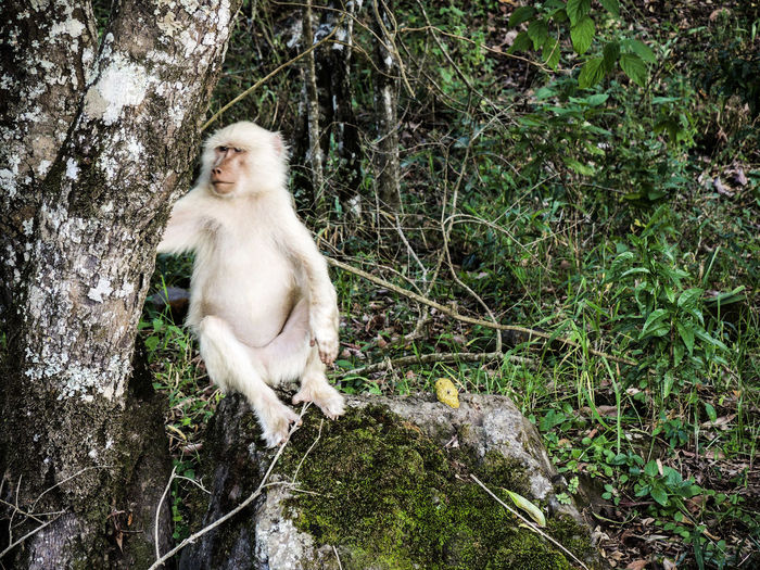 Arusha National Park Albino Albino Baboon Animal Themes Animal Wildlife Animals In The Wild Animals In The Wild Baboon Baboon Albino Baboon Portrait Baboons Day Forest Full Length Mammal Monkey Nature No People One Animal Outdoor Photography Outdoors Portrait Sitting Tree
