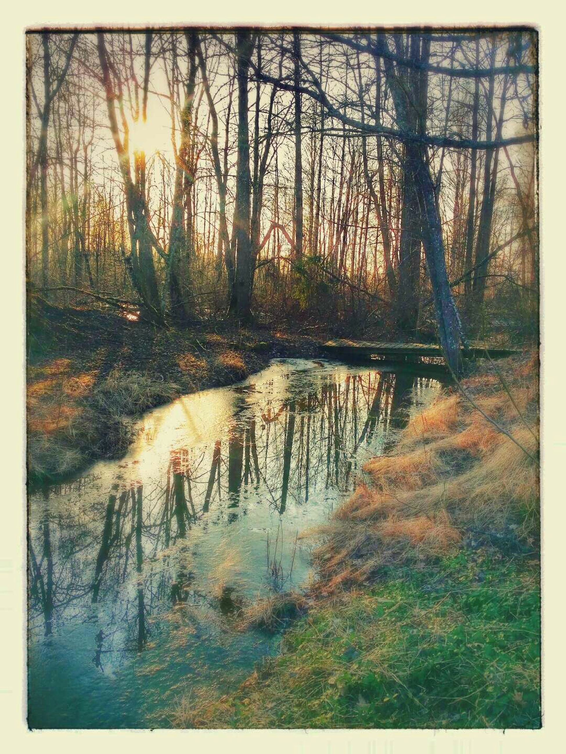 water, sun, tree, transfer print, sunset, tranquility, reflection, tranquil scene, sunlight, auto post production filter, scenics, nature, beauty in nature, river, bare tree, sunbeam, lake, forest, stream, branch