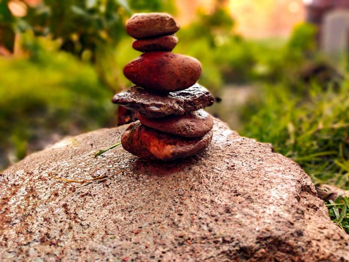 exquisite Close-up Grass Acorn Tree Stump Growing Pine Cone Pine Cone Streaming Blooming Tranquility Toadstool Growth Fungus The Great Outdoors - 2019 EyeEm Awards The Minimalist - 2019 EyeEm Awards