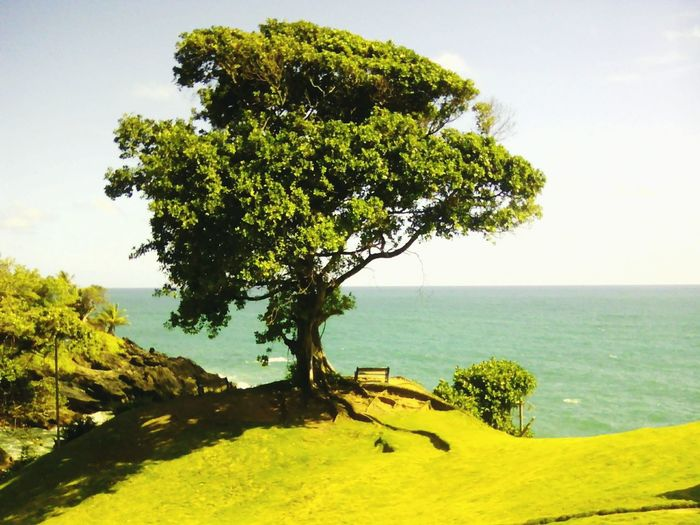 Trinidad And Tobago Toco Ocean Ocean View Green Tree And Sky Tree Over Water Taking Photos View My Daily Adventure