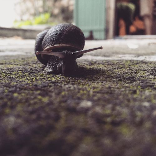 Snail Snails Pace Outdoors Wildlife Small Slow Ground Low Lowlevel
