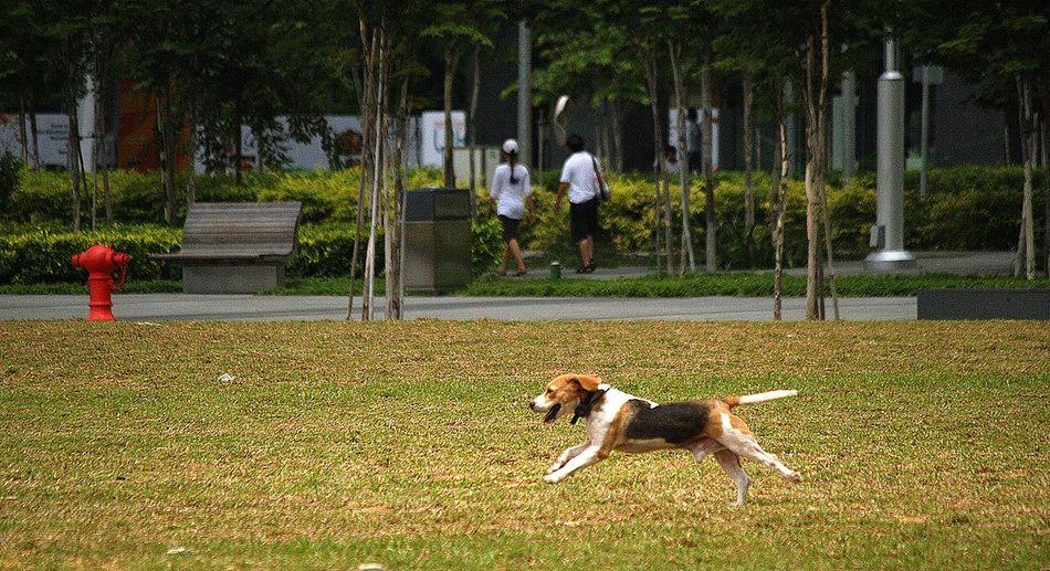 Dog running on field at park