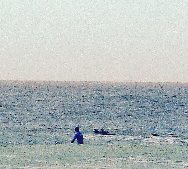 Dolphins Moments Moments To Cherish Surfing Sea