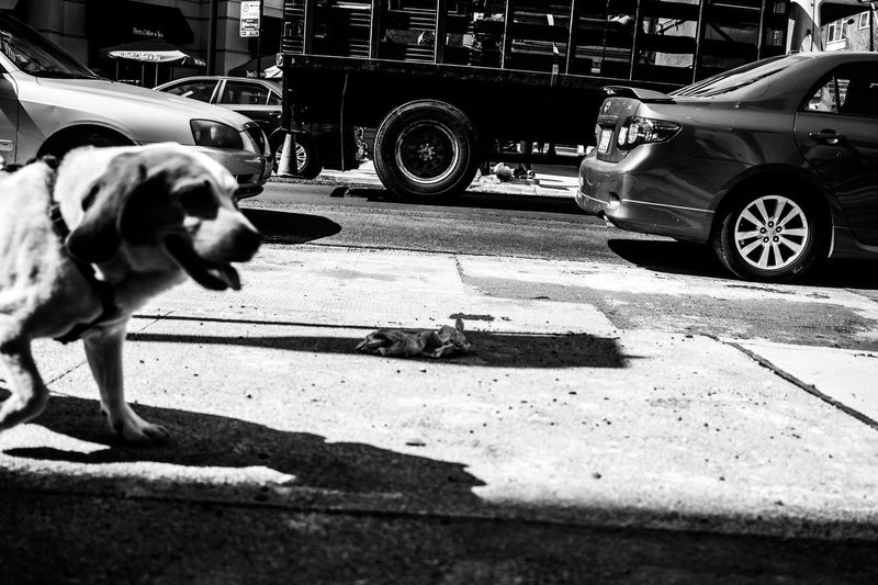 Black And White Blakandwhite Chicago Digital Dog Illinois MidWest Photography Street Street Photographer-2016 Eyem Awards Street Photography Street Photography - EyeEm Awards 2016 Stroll The Street Photographer - 20I6 EyeEm Awards U.S.A United States