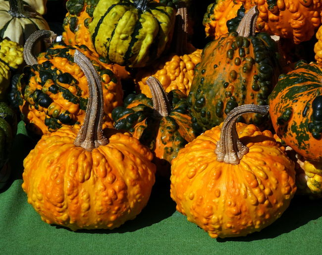 Warty or pimpled pumpkins for sale at a farmer's market Agriculture Autumn colors Farmer's Market Food Gourds Healthy Eating Nutritious Organic Vegetables Pimple  Produce Display Pumpkin Squash - Vegetable Stem Vegetable Warty