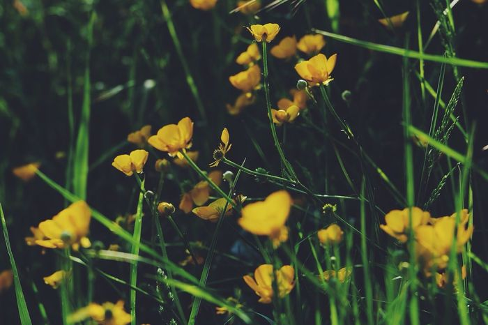 Belgium Fujifilm Nature Photography Rideinnature Flower Nature_collection Littlethingsinlife Nature Yellow Flowers Picoftheday Sun Light Light And Shadow VSCO Vscocam Vscogood