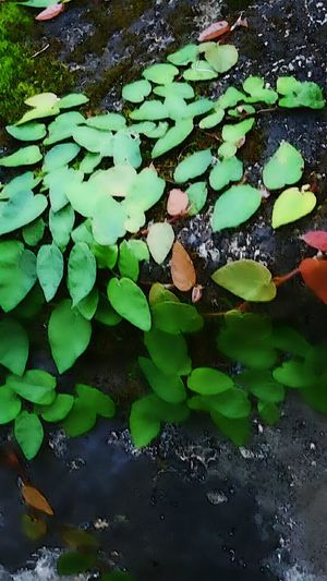 Maximum Closeness Water Green Color Drop Leaf Freshness Nature Close-up No People Backgrounds Beauty In Nature Floating On Water Outdoors Day Rock Moss