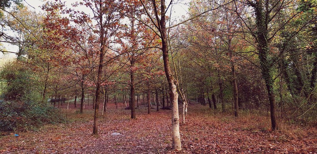 I colori dell' in Umbria Autunno🍁🍁🍁 Autunno Autumn Colors Colori Landscape Paesaggio Fogliediautunno Foglieautunnali Foglie Autunnali Foglie Gialle Foglie Rosse Bosco Nature Photography Nature Natura Campagna Umbra Paesaggio Paesaggioitaliano Paesaggio Umbro Autumn colors Autunn