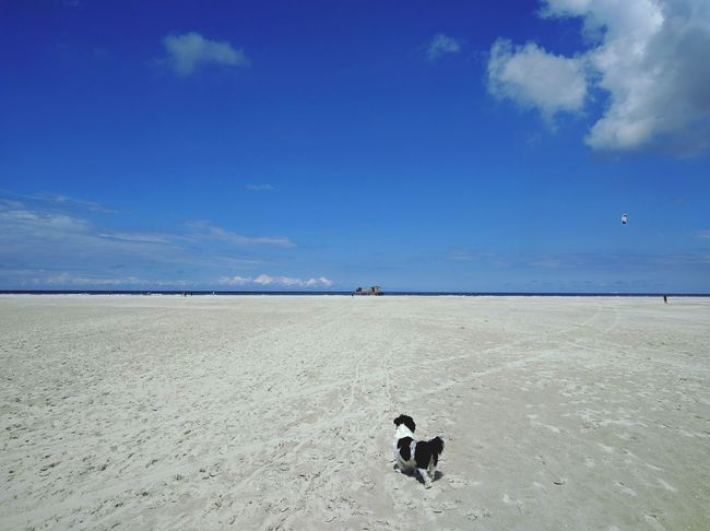 Dog Pets Beach Sea Sand Sky SummerWalking Nature One Animal Schiermonnikoog Hond Strand Zee Zomer Zon HuisdierHuisdieren Dierenfotografie