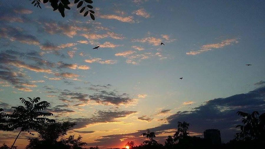 Flying Bird Animals In The Wild Animal Themes Silhouette Animal Wildlife Animal Sky No People Low Angle View Sunset Large Group Of Animals Outdoors Nature Beauty In Nature Living Organism Day