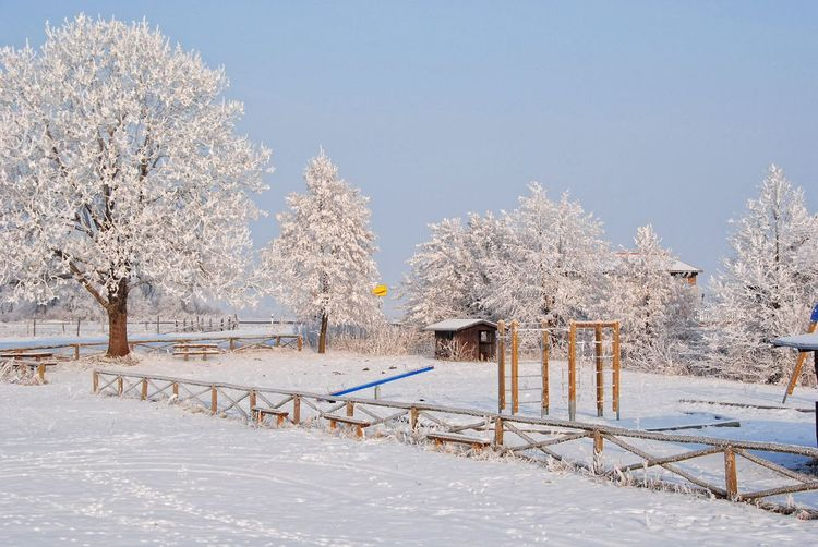 Beauty In Nature Cold Temperature Day Nature Oderbruch Snow Tree Winter