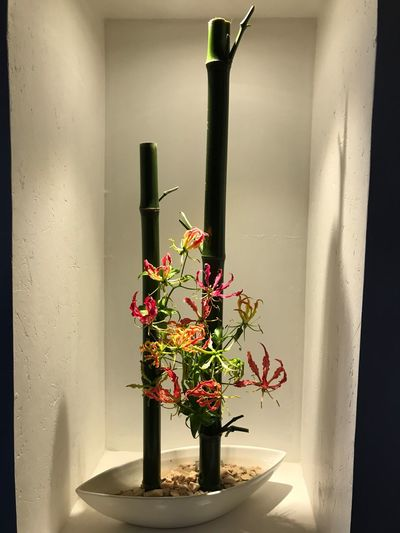 Ikebana Japonese Culture Plant Indoors  Flowering Plant No People Flower Wall - Building Feature Vase Decoration Flower Arrangement Visual Creativity