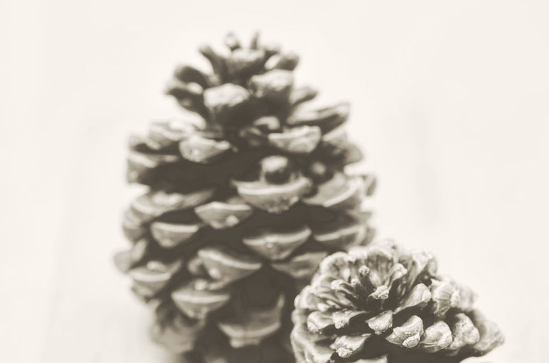 stone pine cones - nature backgrounds Art Autumn Backgrounds Black And White Close-up Composition Conifer Cones Creativity Detail Dry Elégance Focus On Foreground Fragility Full Frame Nature Nature Photography Nature_collection Negative Space New Life Selective Focus Softness Still Life Stone Pine Cone
