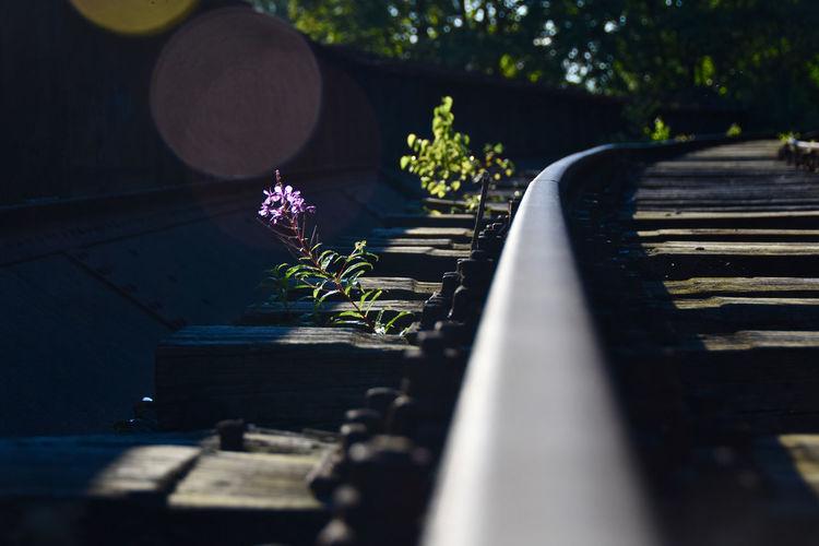 Close-up of purple flower on tracks