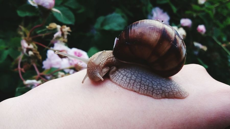 Cropped image of person holding snail