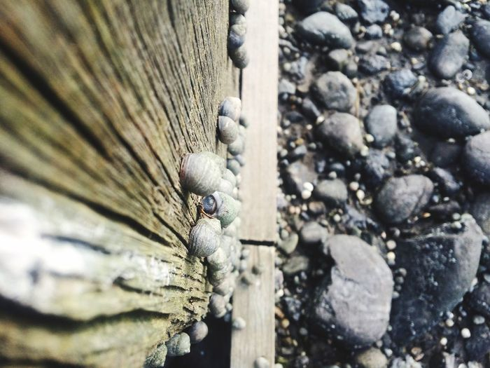 High angle view of snails on wooden wall