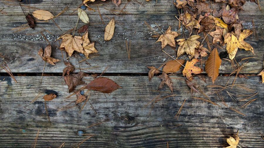 Close-up of dry autumn leaves on wood