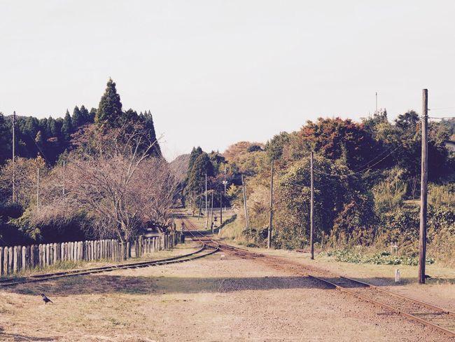 小湊鉄道 上総中野 Japan Japan Photography Tree The Way Forward Clear Sky Outdoors No People Day Nature Sky Japanese Photography