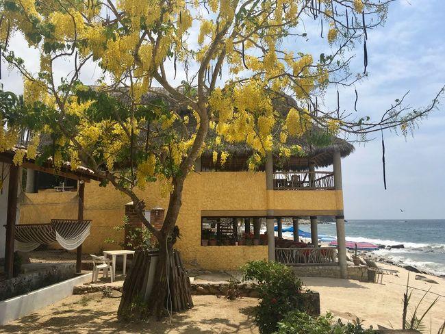 Yellow house, yellow tree Freshness Yellow House  Yellow Tree Beachphotography Nature Nature_collection Hammock