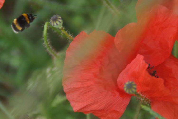 Flower Hommel