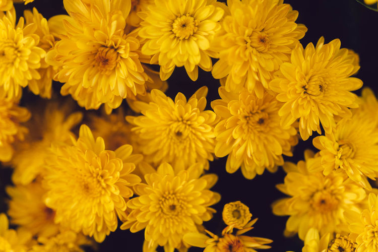 This Is Strength Growth Beauty In Nature Close-up Nature Petal Inflorescence Yellow Plant Chrysanthemum Vulnerability  Full Frame Fragility Flower Head Flower No People Flowering Plant Freshness Bunch Of Flowers Day Pollen Outdoors