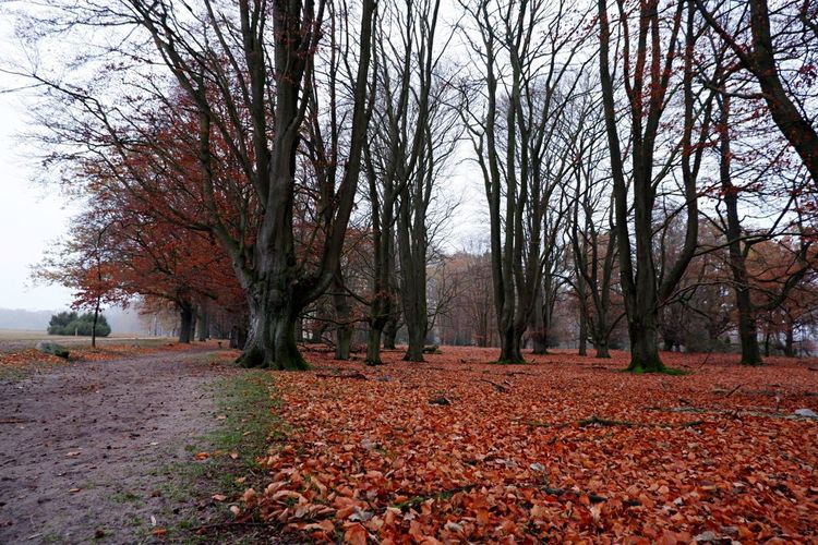 Fall Wilsede Outdoors Lüneburgerheide November Tree Plant Change Autumn Beauty In Nature Nature Tranquility Scenics - Nature No People Trunk