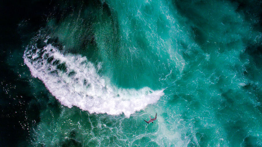 Aerial view of bird flying over sea waves