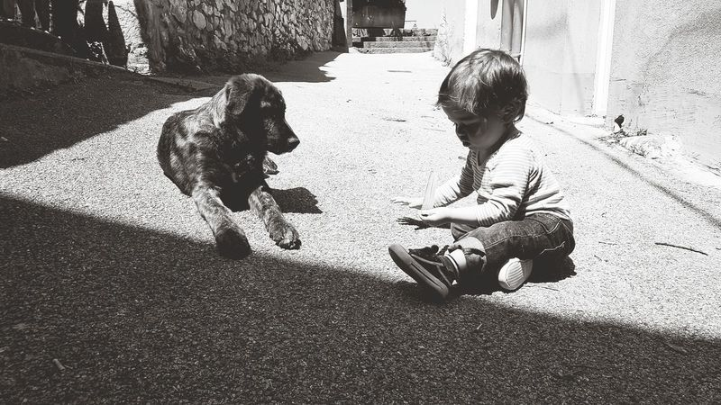 Full Length Shadow Togetherness Sunlight Boys Stray Animal Carnivora Domestic Animals Pets Dog