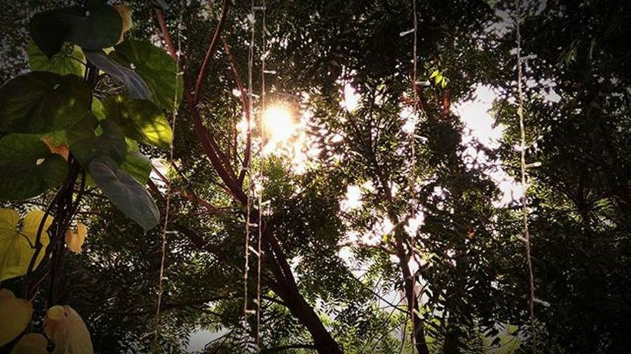Nature Dense Naturation Green Good Picoftheday