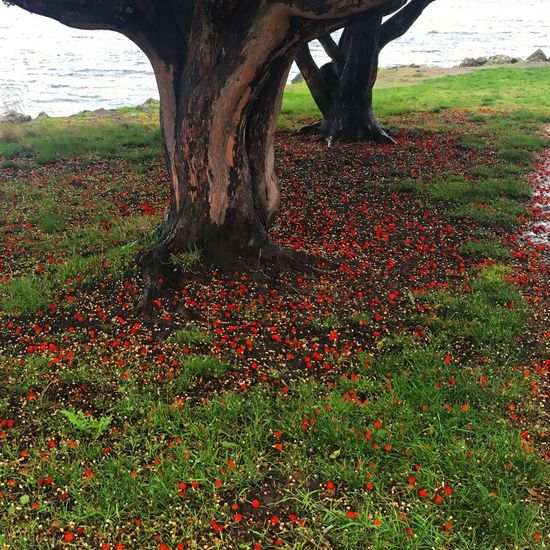 Fallen apples Nature Tree Red Tree Trunk Beauty In Nature Outdoors No People Grass Seattle