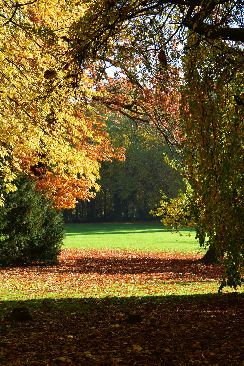 tree, autumn, nature, change, growth, beauty in nature, leaf, tranquility, no people, scenics, outdoors, day, sky