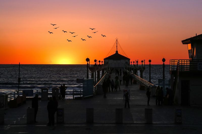 Sunset Bird Sea Silhouette Large Group Of Animals Sky Flock Of Birds Water Horizon Over Water Flying Nature Large Group Of People Beauty In Nature Outdoors Scenics Animals In The Wild Built Structure Men Real People Seagull Los Angeles, California
