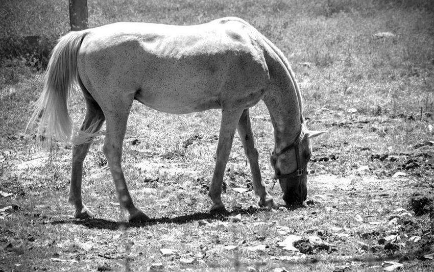 Shootermag Nature_collection Bw_collection EyeEm Nature Lover