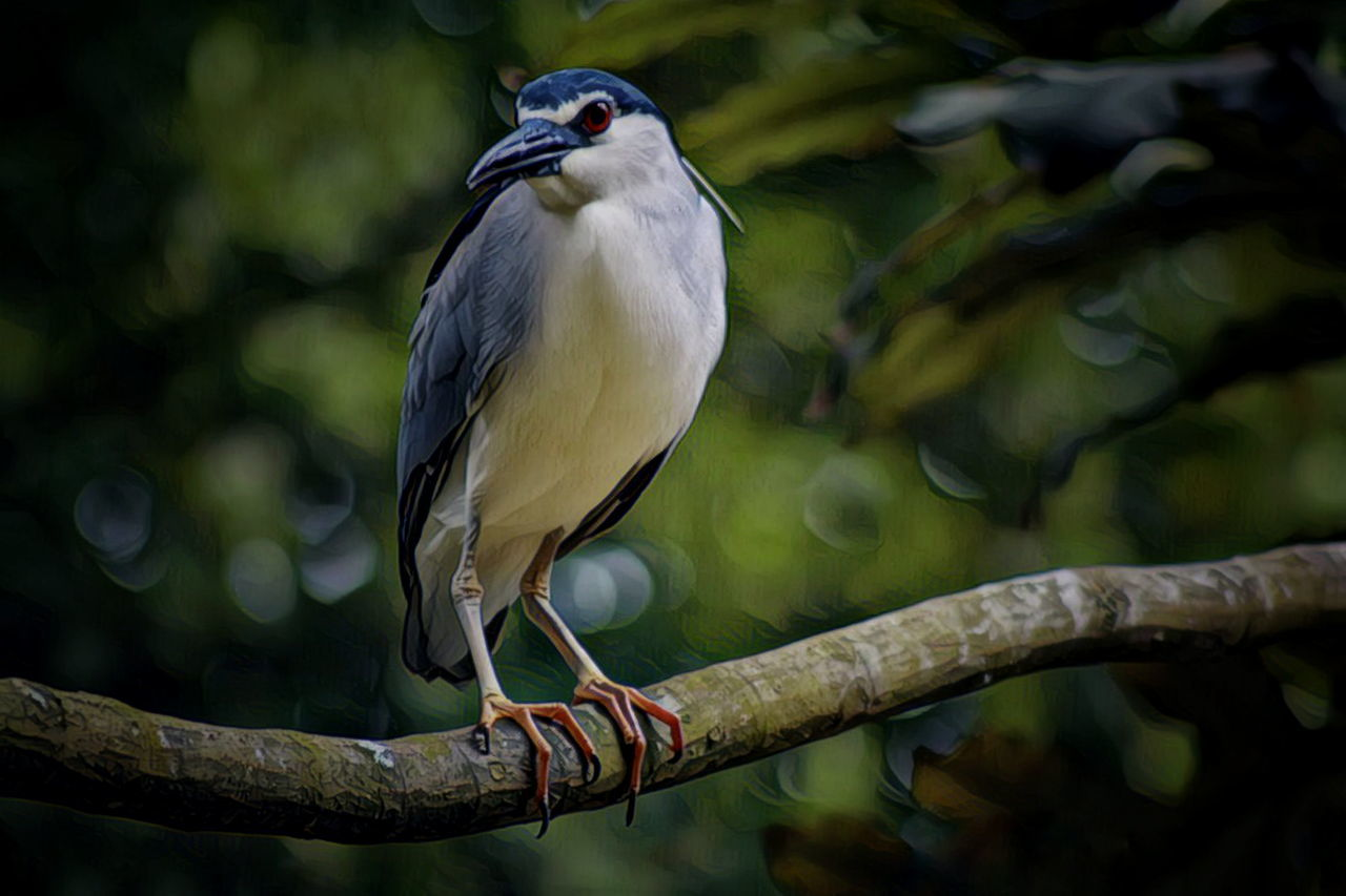 bird, animal themes, animals in the wild, one animal, animal wildlife, perching, focus on foreground, day, no people, nature, outdoors, branch, close-up, tree, beauty in nature