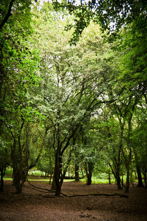 Forest Walk Green Nature Trees Beauty In Nature Day Forest Growth Landscape Nature No People Outdoors Tranquility Tree