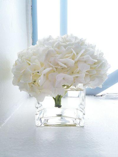 White Hydrangea Flower On Windowsill Backlight Glass Flower Vase White On White